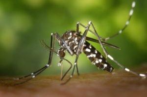 Nejvíce nebezpečný komár