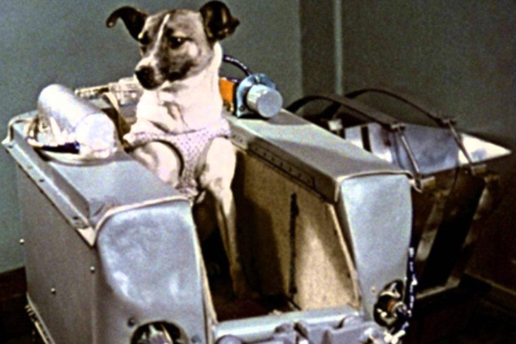 Zvířecí kosmonauti - Lajka