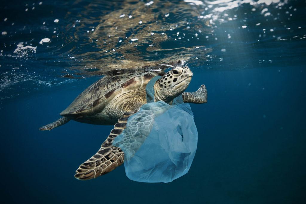 Znečištění oceánu