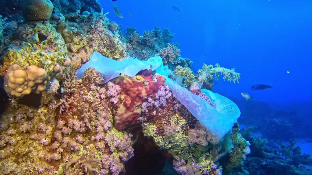 Znečištění korálových útesů