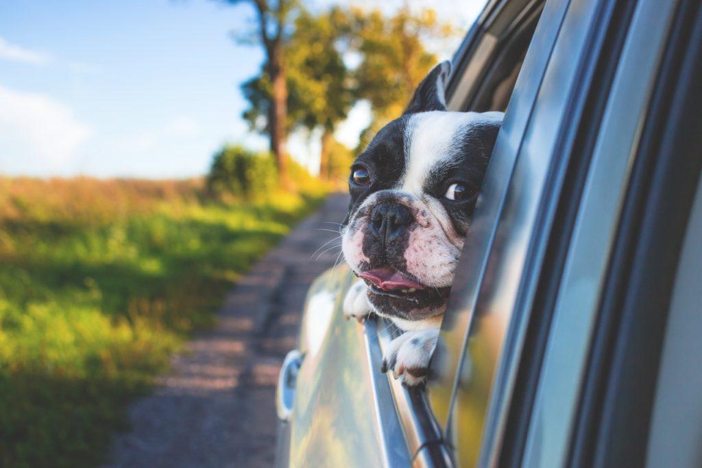 Autem na dovolenou klidně i se psem