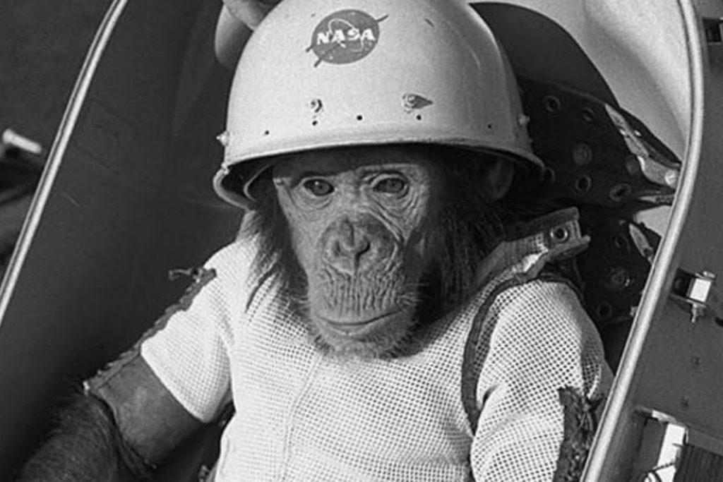 Zvířecí kosmonauti - šimpanz Ham