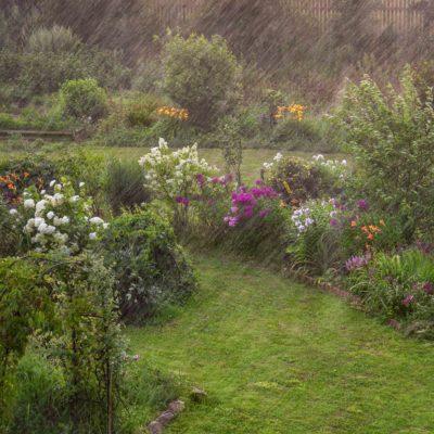 Počasí umí zahradu pěkně potrápit