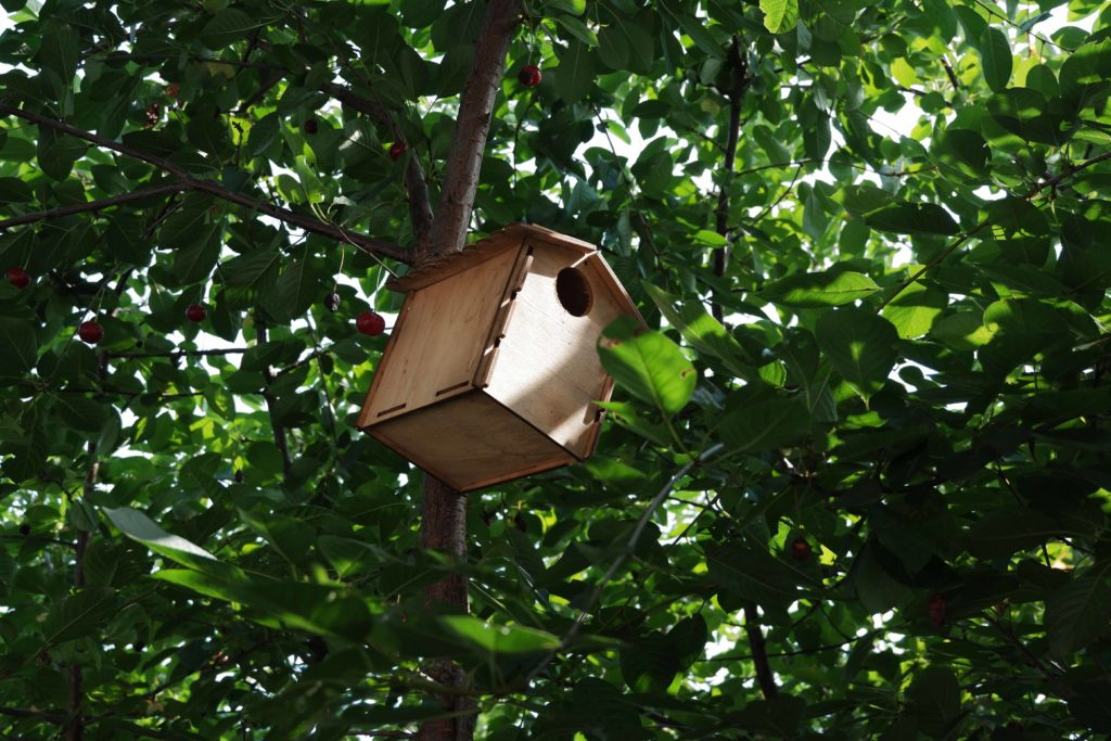 Ptačí budky jako pomoc ptákům
